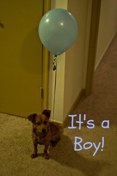 Toby balloon2