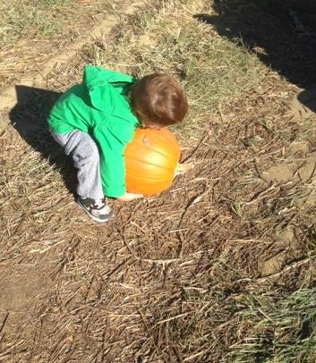 nolan pumpkin