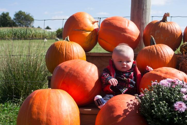 pumpkin baby2